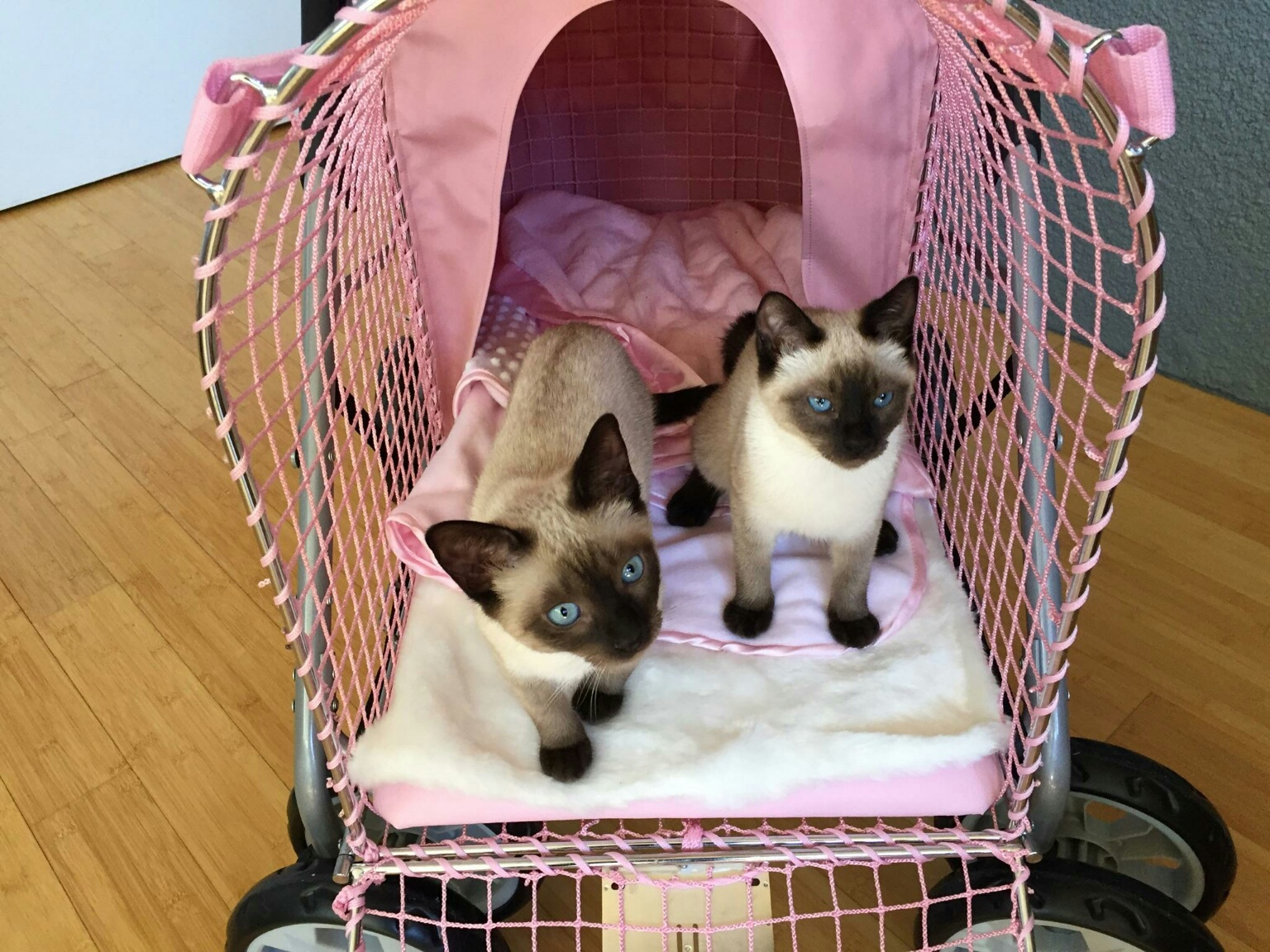 Bell and Coco and the Baby Buggy