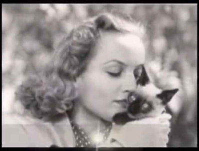 lombard with kitten