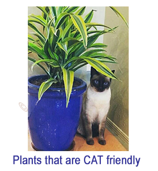 List of Cat Friendly Plants
